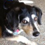 Dog Rescue Programs