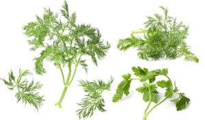 8 Herbs for Optimal Health and Healing