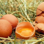 Why Are Eggs Good or Bad for You: Healthy or Unhealthy?