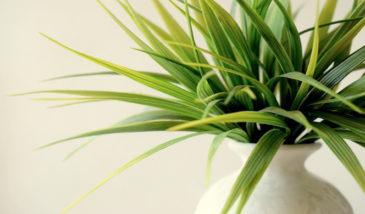 Indoor Plants That Are Easy Keepers