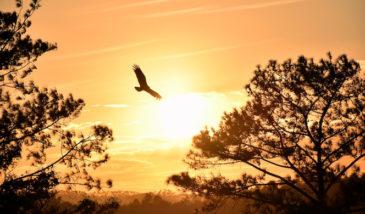 Fly as a Free Bird