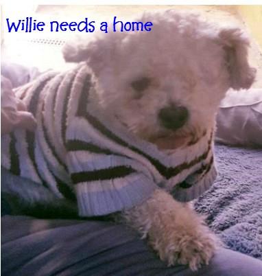 willie22