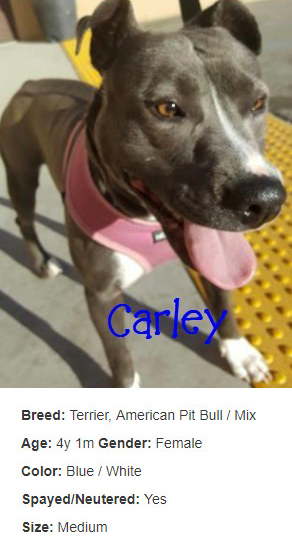 carley-with-info