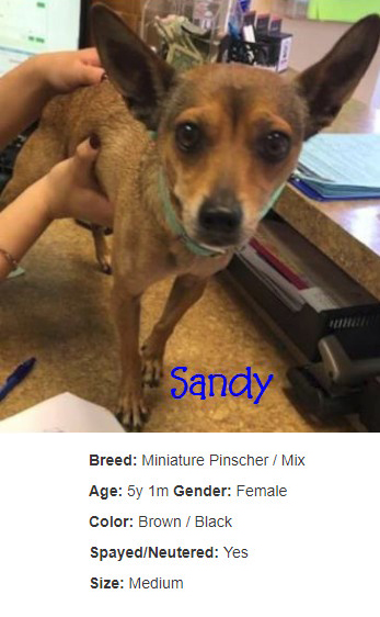 sandy-with-info