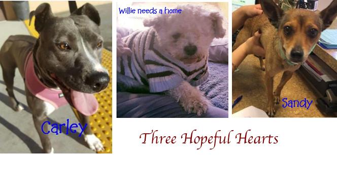 three-hopeful-hearts-feat-image